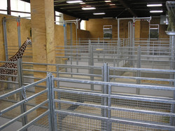 View of giraffe facility. Photo courtesy of Amber Eagleson, Fort Wayne Children's Zoo.