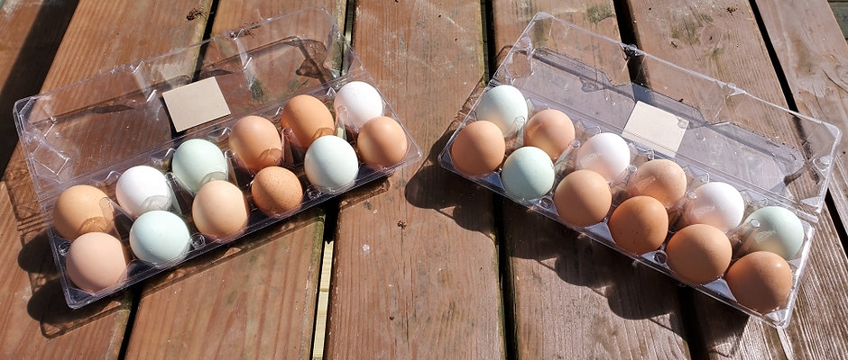 Free Range Chicken Eggs