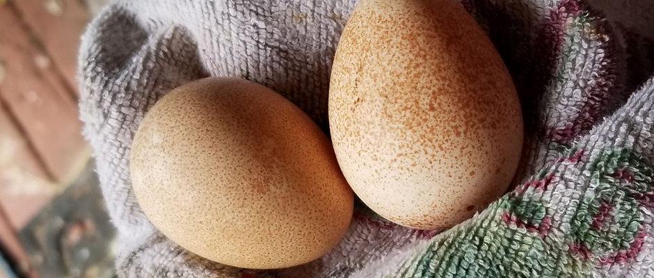 Guinea Eggs (6 Eggs)