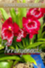 Prize-winning orchids on book cover of cozy mystery Final Arrangements by Donna Huston Murray set at world-famous Philadelphia Intenatonal Flowe Show