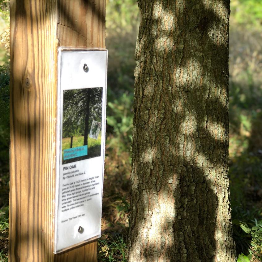 Pin Oak Sign