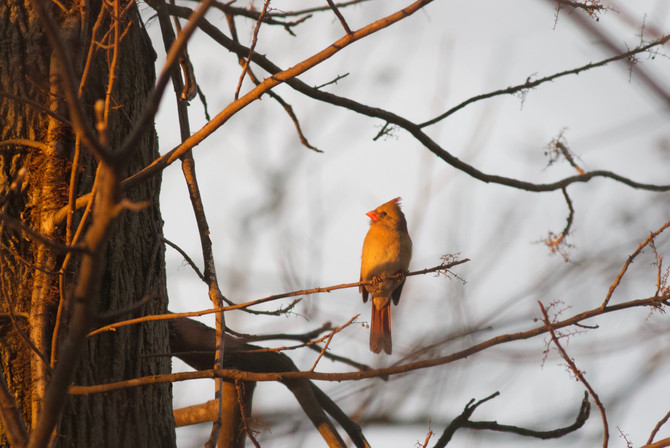 Weekly Report - 2018-01-19 - Winter Birding Heats Up!
