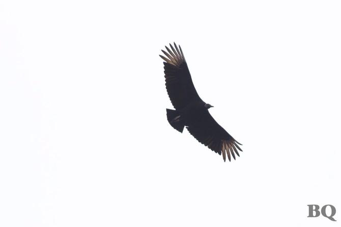 Weekly Report - 2017-04-07 - BIRD SPECIES #116 & FOY BIRD!