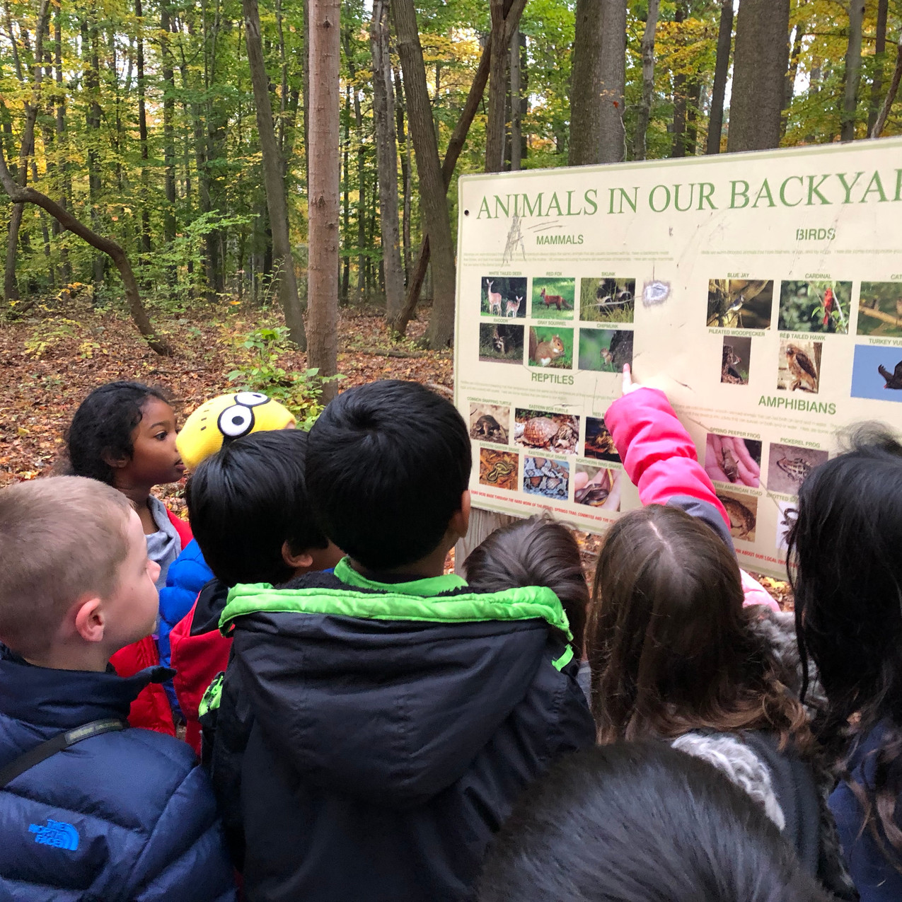 Reviewing our Backyard Animals