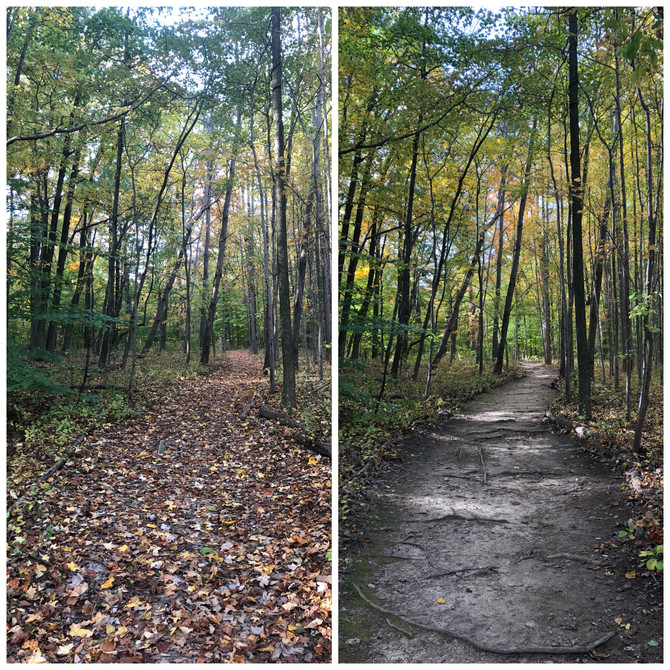 Event Report - Nature Trail Cleanup
