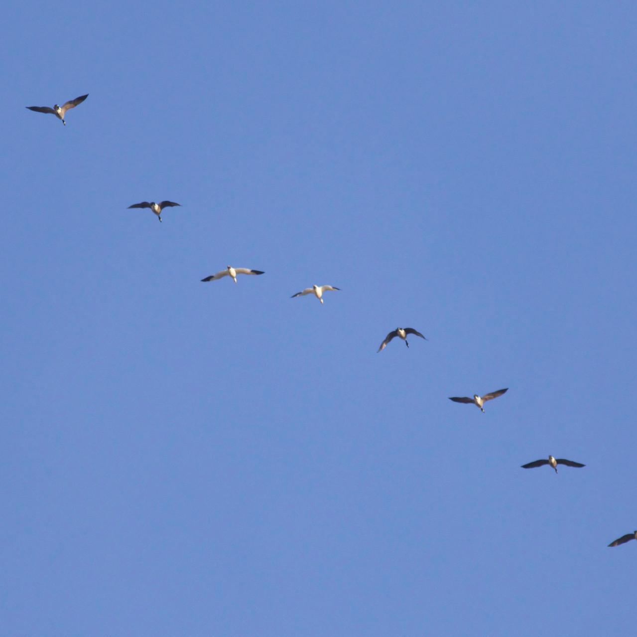 Almost Bird #116...