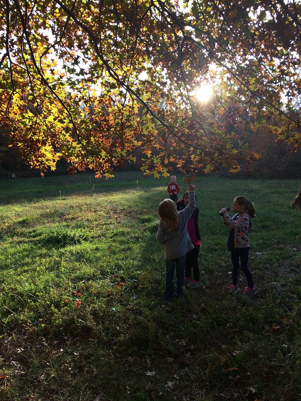 Wonderful fall foliage under our favorite Pin Oak!
