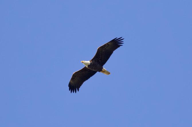 BSES Birding Club, Fall 2018