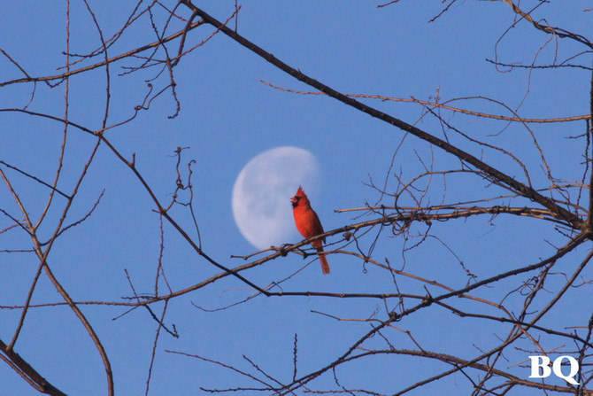 Weekly Report - 2017-03-17 - Cardinal Moon
