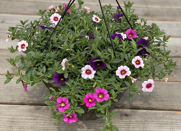 Mother's Day Hanging Baskets: Berry Daring