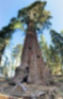 טיול ליוסמטי פארק ועציי הסקוייה.jpg