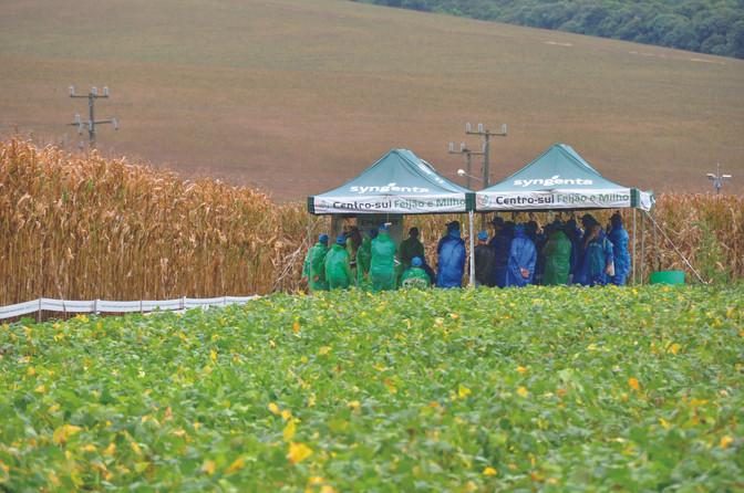 O projeto Centro-Sul de Feijão e Milho reúne produtores de todo o Paraná