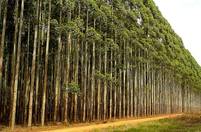 Masisa consolida seu programa de Parceria Florestal
