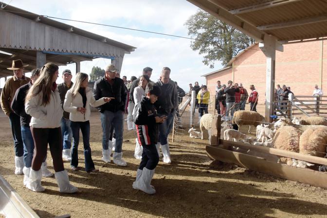 Criadores conhecem propriedades referência no Rally do Cordeiro