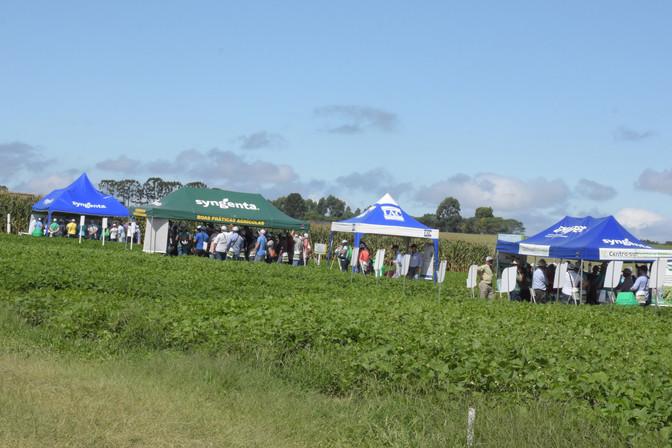 Feijão e milho importante na qualidade de vida e desenvolvimento econômico
