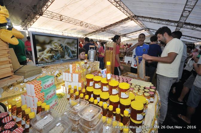 Região de Ponta Grossa é responsável por 21% da produção de mel no PR