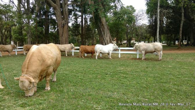 A Pecuária Moderna quer acabar com o boi sanfona