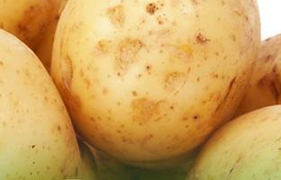 Patates Tarımı