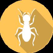 termite infestation and termite extermination
