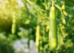 Eco-schuursponsjes LUFFA natuurlijke spo