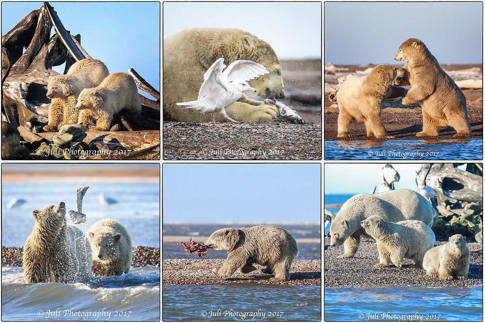 Polar Bears At The Bone Pile