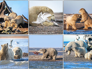 Kaktovik, Polar Bears and the Arctic Circle Wildlife Photography