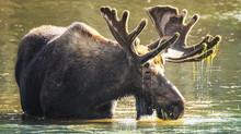 Wildlife or Weddings