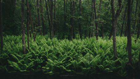 Layer of ferns