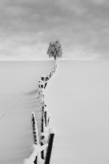 Lonely tree with fence, Norway