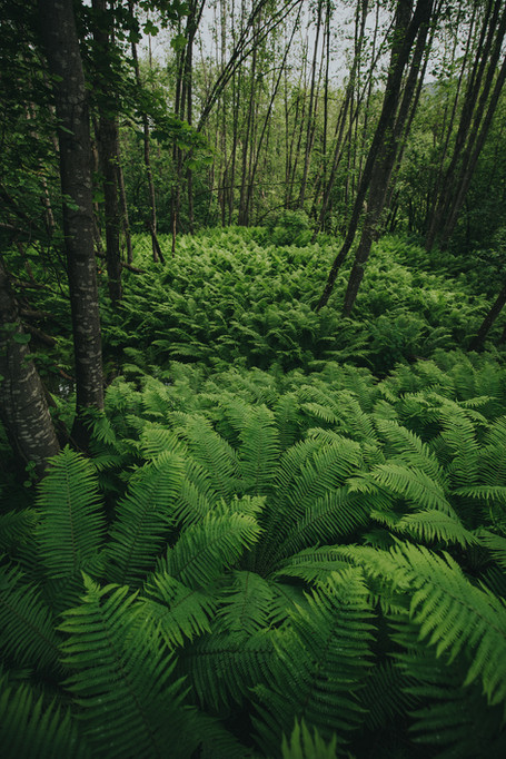 Fern full of ferns
