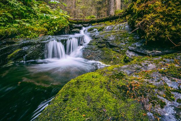 Vestre Gausdal skog