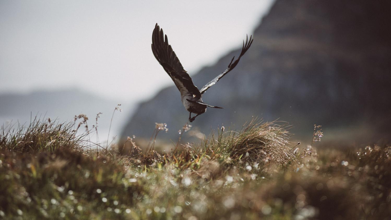 Bird on Runde