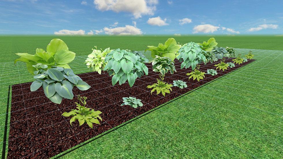 Hosta Garden Plans