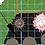 Thumbnail: Full Sun Fence Garden Plan