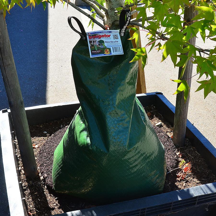 Treegator pro zahradní školky