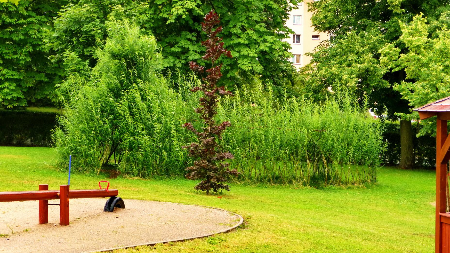 Vrbové teepee z živé vrby s tunelem