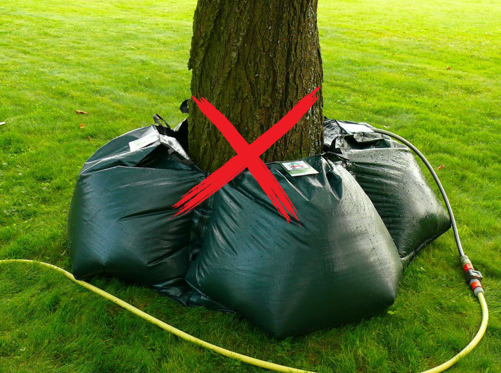 Toto je špatný a nebezpečný způsob, jak zalévat vzrostlý strom. Je to pro striom nebezpečné. Stromy by se měly vždy zalévat na nebo za hranicí koruny.