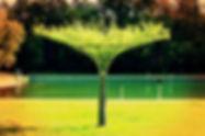 Živý vrbový slunečník