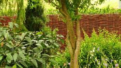 Proutěný plot, který není průhledný