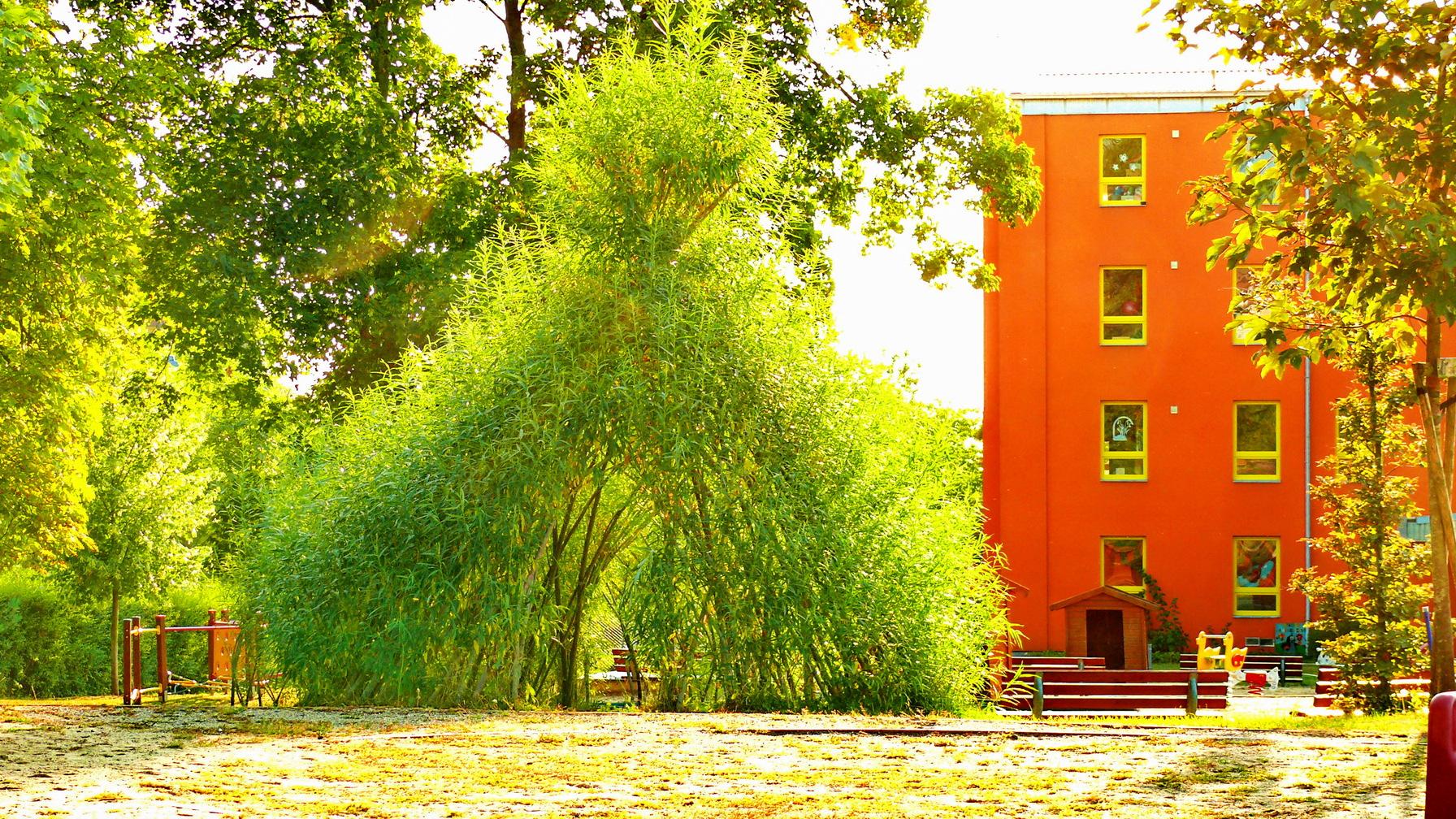 Vrbové teepee z živé vrby