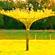 Vrbový slunečník