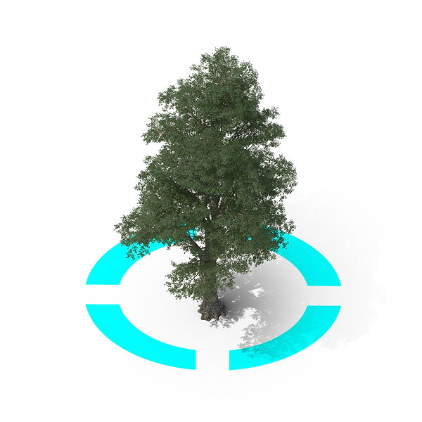 Tilia-tree-3D-with-irrigation-zone.jpg