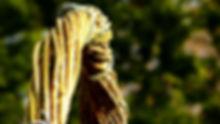Svatební vrbový oblouk z živé vrby