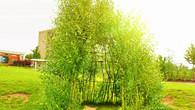 Revitalizace vrbového teepee v MŠ Vorlina