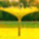 Živý slunečník z vrby