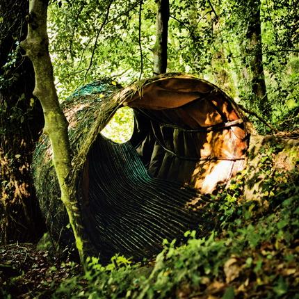 Lesní hnízdo