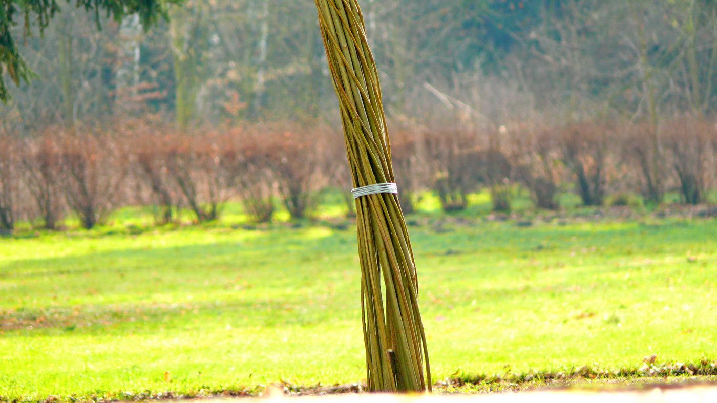 Svatební oblouk z živé vrby