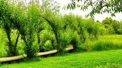 Vrbové stavby Říčany