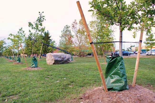 Instalace vaků Treegator v parku