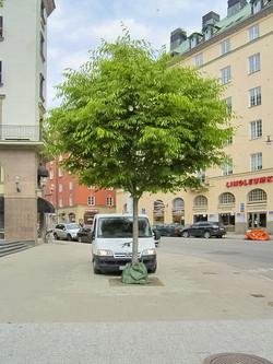 Zavlažovac vaky v ulicích Stockholmu